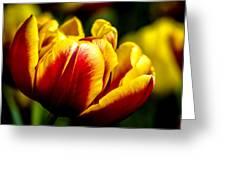 Tulips 7 Greeting Card