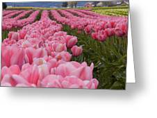 Tulips 9 Greeting Card