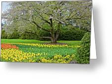Tulips And Cherry Blossom 2 Greeting Card