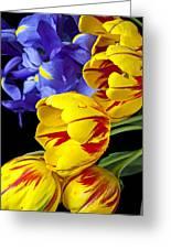 Tulips And Iris Greeting Card