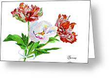 Tulips And Pink White Peony Greeting Card