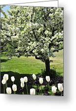 Tulips And Tees Greeting Card