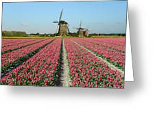 Tulips And Windmills In Holland Greeting Card