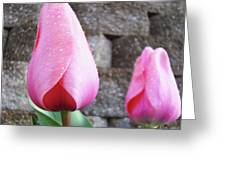Tulips Artwork Flowers 26 Pink Tulip Flowers Art Prints Nature Floral Art Greeting Card