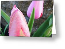 Tulips Artwork Pink Tulip Flowers Srping Florals Art Prints Baslee Troutman Greeting Card