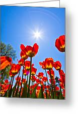 Tulips At Ottawa Tulips Festival Greeting Card