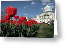Tulips At The Capitol Greeting Card