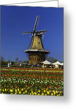 Tulips At The Windmill Greeting Card