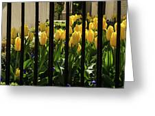 Tulips Behind Bars Greeting Card