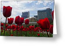 Tulips Blooming Greeting Card