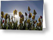 Tulips Blooming With Sun Star Burst Greeting Card