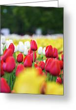 Tulips By Jared Windmuller - Tulip - Red -  Greeting Card