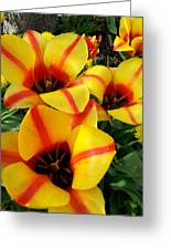 Tulips By The Artist Greeting Card