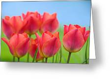 Tulips Close Up  Greeting Card