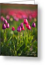 Tulips Dream Greeting Card