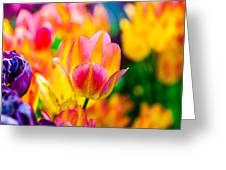 Tulips Enchanting 16 Greeting Card