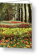Tulips Everywhere 1 Greeting Card
