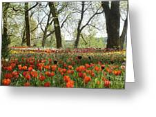 Tulips Everywhere 2 Greeting Card
