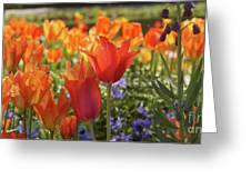 Tulips Everywhere 3 Greeting Card