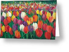 Tulips Everywhere Greeting Card