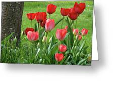 Tulips Flowers Art Prints Spring Tulip Flower Artwork Nature Art Greeting Card