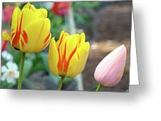 Tulips Garden Art Prints Yellow Red Tulip Flowers Baslee Troutman Greeting Card