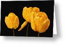 Tulips - Id 16235-220512-0422 Greeting Card
