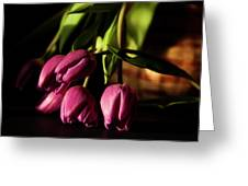 Tulips In Evening Sunlight Greeting Card