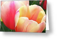 Tulips In Soft Pastels Greeting Card
