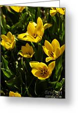 Tulips In Sping Greeting Card