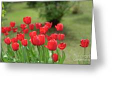 Tulips In Spring 3 Greeting Card