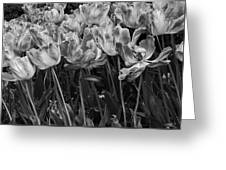Tulips In The Breeze Greeting Card