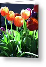 Tulips In The Light Greeting Card