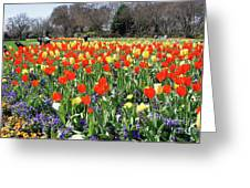 Tulips In The Park. Greeting Card