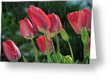 Tulips In The Rain Greeting Card