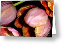 Tulips In The Shadows Greeting Card
