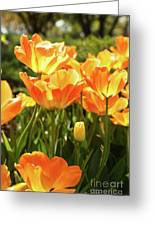 Tulips In The Sunlight Greeting Card