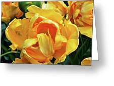Tulips In Yellow Too Greeting Card