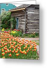 Tulips Lead To The Cabin Greeting Card