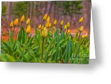 Tulips Love Greeting Card