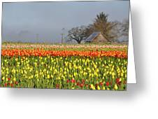 Tulips Morning Landscape Greeting Card