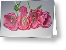 Tulips On White Greeting Card