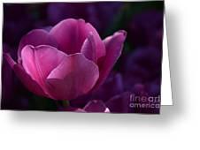 Tulips Purple Layers Greeting Card
