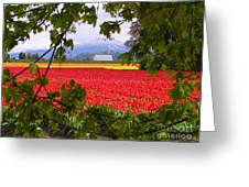 Tulips Secret Window Greeting Card