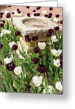 Tulips Surround The Bird Bath Greeting Card