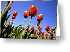 Tulips Time 3 Greeting Card