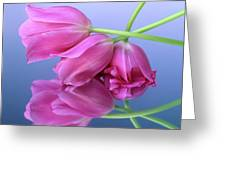 Tulips .tulipa. Greeting Card