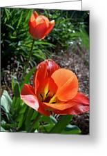 Tulips Wearing Orange Greeting Card