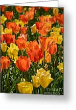 Tulips Yellow And Tangerine Greeting Card