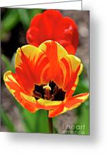 Tulips Yellow Red Greeting Card